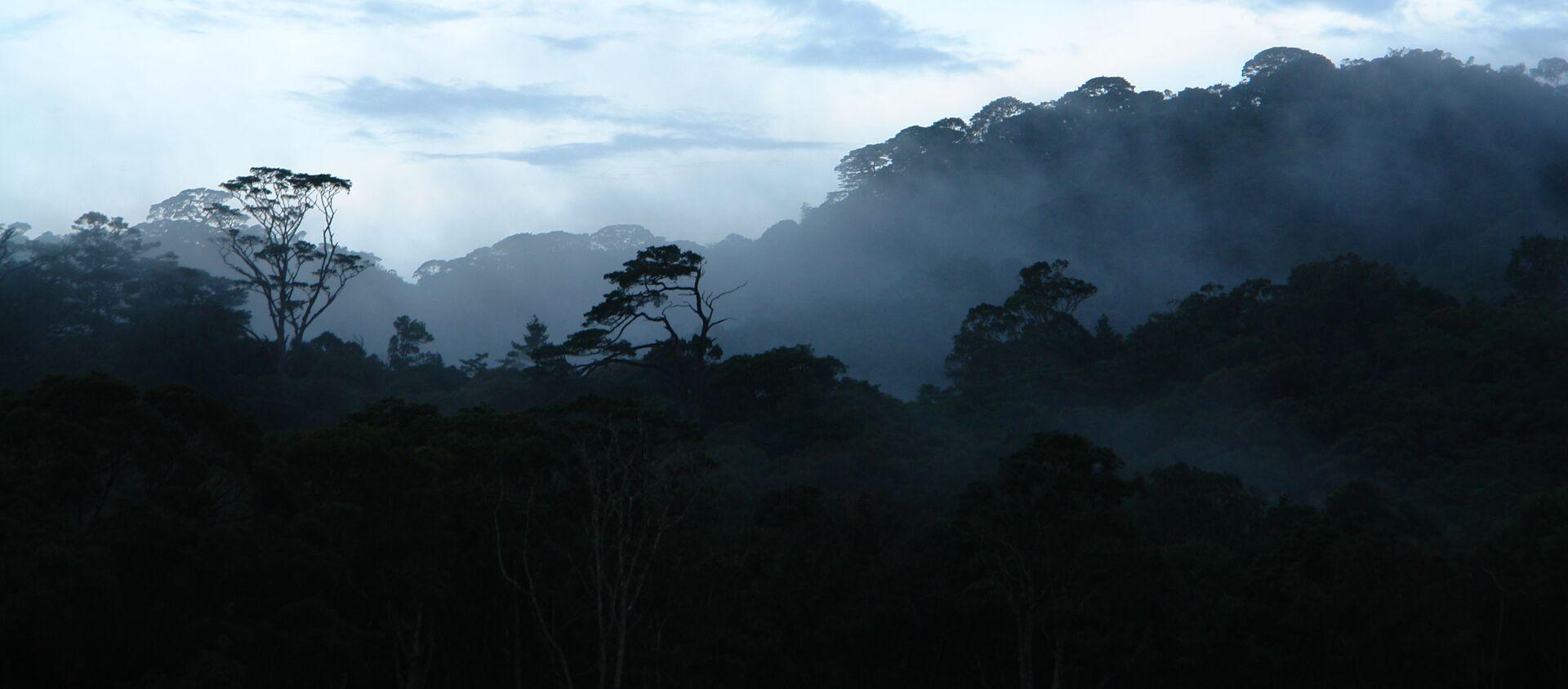 khu rừng cận nhiệt đới trên cao nguyên Langbian (miền Nam Việt Nam)  - Sputnik Việt Nam, 1920, 14.04.2021