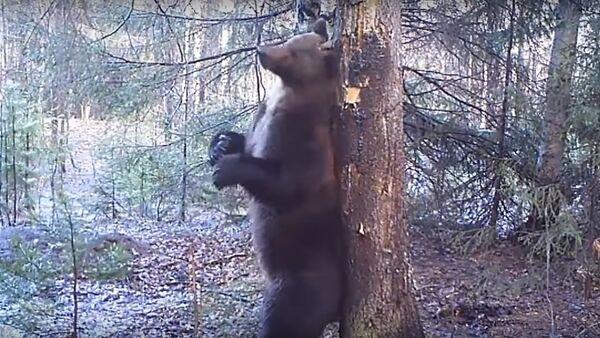 Bắt quả tang gấu vũ công thoát y - Sputnik Việt Nam