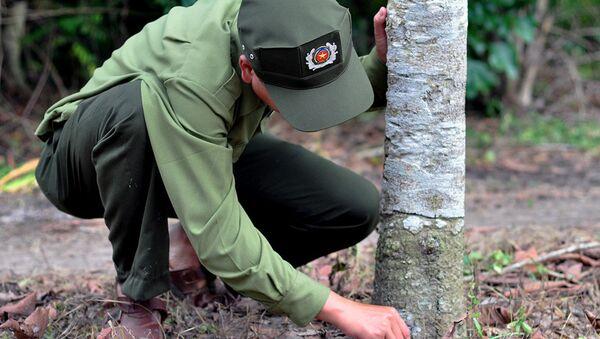 Lực lượng chức năng kiểm tra thì phát hiện mỗi cây bị khoan 3 mũi, bên trong có thuốc diệt cỏ. - Sputnik Việt Nam