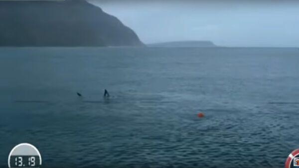 Vận động viên bơi lội lừng danh nhất lịch sử không vượt được cá mập trắng - Sputnik Việt Nam