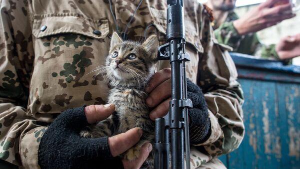 Donetsk. Con mèo trên tay tình nguyện viên Donbass... - Sputnik Việt Nam