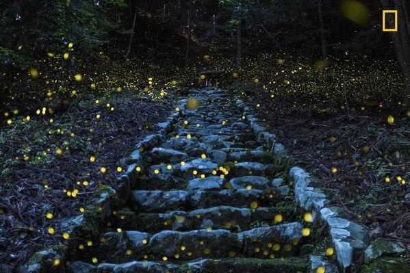 Yutaka Takafuj. Forest of the Fairy.  Giải khuyến khích trong hạng mục Thiên nhiên - Sputnik Việt Nam