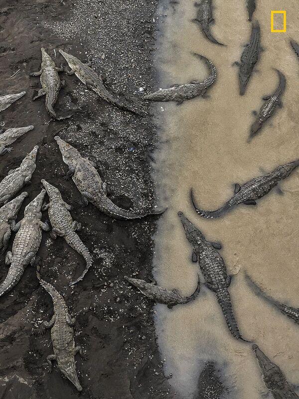 Tarun Sinha. Crocodiles at Rio Tarcoles. Giải 3 trong hạng mục Thiên nhiên. - Sputnik Việt Nam