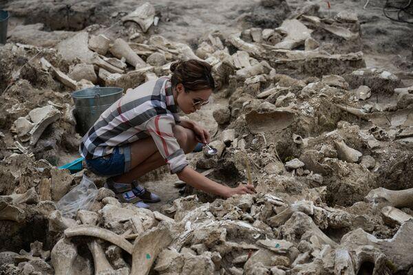 Viện Bảo tàng-Khảo cổ Kostenki (vùng Voronezh của Nga). Tẩy sạch xương voi ma-mút tìm được qua cuộc khai quật. - Sputnik Việt Nam