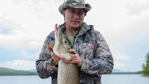 Tổng thống Nga Vladimir Putin trong một buổi câu cá ở khu vực Krasnoyarsk. - Sputnik Việt Nam