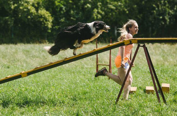 Nga. Cuộc thi của những người huấn luyện chó tại thành phố Ivanovo. - Sputnik Việt Nam