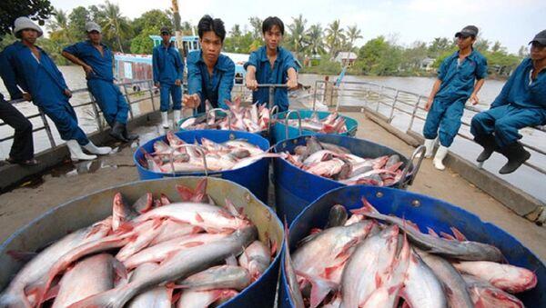Người nuôi cá tra cần tỉnh táo, không nên tăng diện tích nuôi - Sputnik Việt Nam