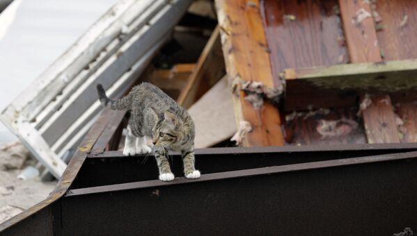 Con mèo trên tàn tích tòa nhà bị bão tàn phá - Sputnik Việt Nam