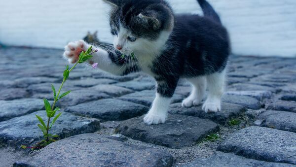 con mèo - Sputnik Việt Nam