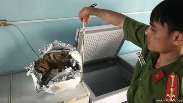Phát hiện trong bể rượu ngâm một xác cọp con - Sputnik Việt Nam