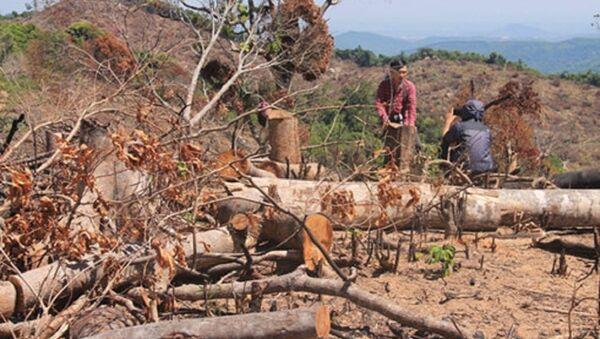 Những cánh rừng bị tàn phá không thương tiếc - Sputnik Việt Nam