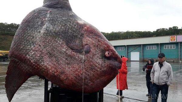 Con cá khổng lồ tại Nga phải ba ngày mới kéo được lên bờ - Sputnik Việt Nam