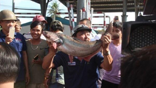 Tài xế mang cá tra đến 'cúng' trạm BOT tuyến tránh Biên Hòa - Sputnik Việt Nam
