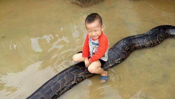 Bé trai chơi đùa cùng trăn khổng lồ trong sân nhà ngập nước sau lũ - Sputnik Việt Nam
