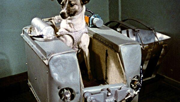 con chó Laika - Sputnik Việt Nam