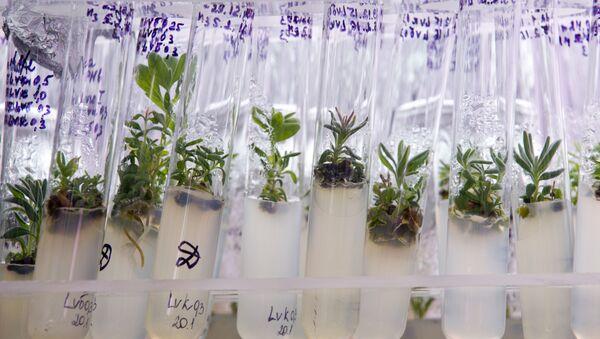 Plant samples at the laboratory - Sputnik Việt Nam