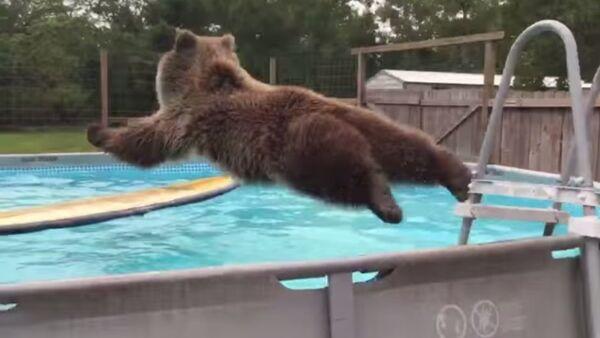 Gấu nhảy vào bể bơi - Sputnik Việt Nam