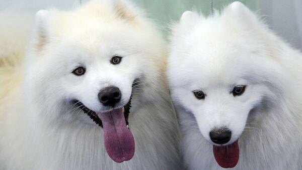 Hai con chó - Sputnik Việt Nam