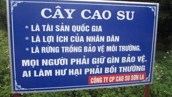 Người dân Sơn La đang khóc dở, mếu dở vì cây cao su nhưng không dám phản ứng mạnh vì cây cao su được coi là Tài sản Quốc gia ở Sơn La - Sputnik Việt Nam