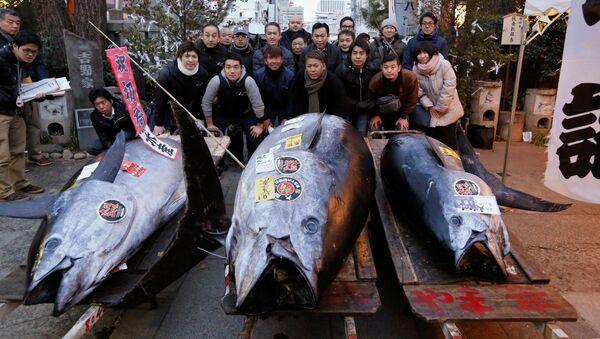 Голубой тунец весом 405 кг на рынке морепродуктов Цукидзи в Токио - Sputnik Việt Nam