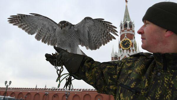 Ястреб Соколиной службы комендатуры Московского Кремля - Sputnik Việt Nam