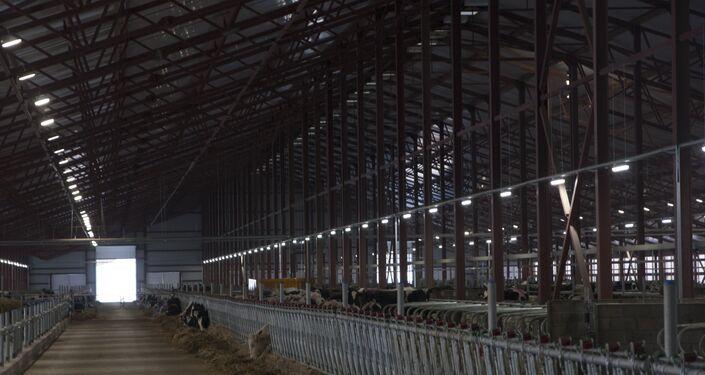 31.01.2018 Khai trương tổ hợp chăn nuôi bò sữa do tập đoàn TH True Milk xây dựng ở quận Volokolamsky, tỉnh Moskva.