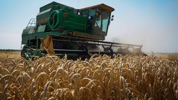 Уборка пшеницы в Краснодарском крае - Sputnik Việt Nam