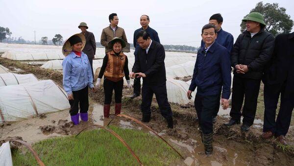 Bộ trưởng lội ruộng cùng nông dân, Bắc Ninh treo thưởng 100 triệu cấy nhanh - Sputnik Việt Nam