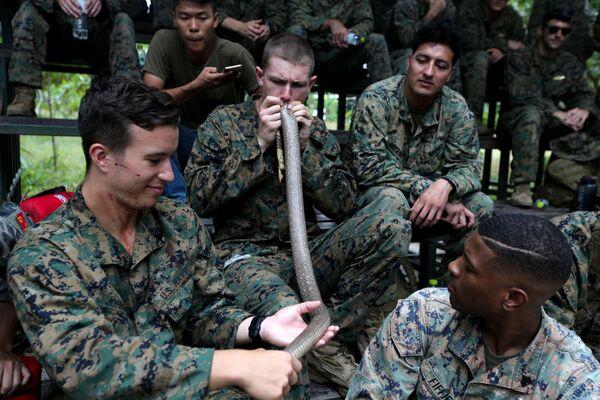 Lính thủy quân lục chiến tập ăn con tắc kè ở quá trình huấn luyện sinh tồn trong rừng - một phần cuộc tập trận chung Cobra Gold 2018 ở Thái Lan - Sputnik Việt Nam