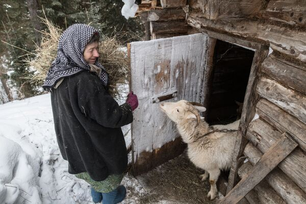 Nữ tu ẩn dật Siberia Agafya Lykova cho dê ăn - Sputnik Việt Nam