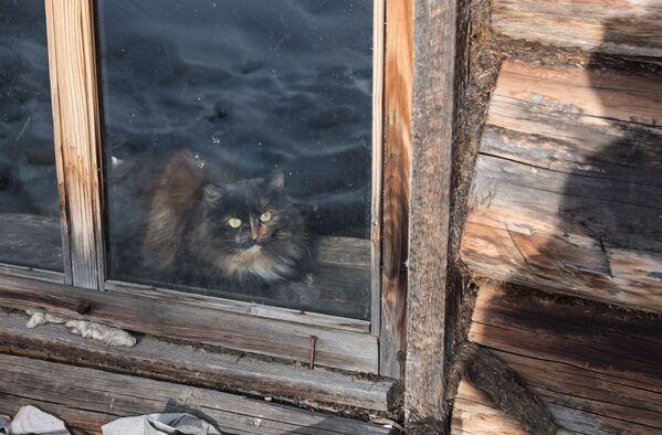 Con mèo trong ô cửa sổ căn nhà nữ tu ẩn dật Agafia Lykova - Sputnik Việt Nam