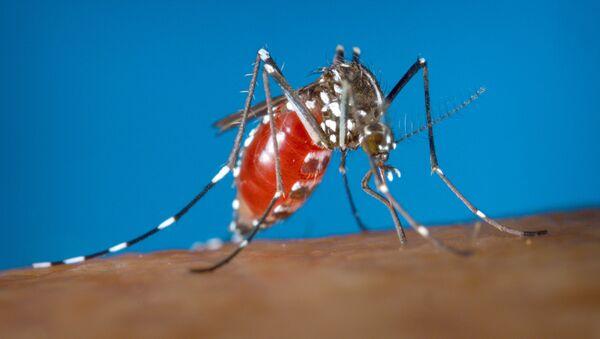 muỗi - Sputnik Việt Nam