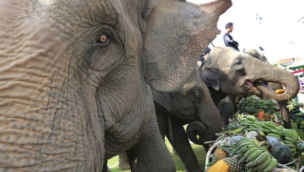 Voi ăn trái cây trước khi voi ở Bangkok, Thái Lan - Sputnik Việt Nam