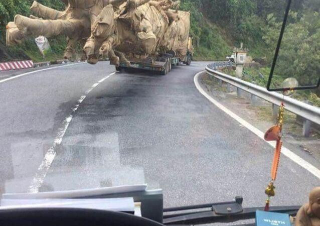 Trước đó, CTV Dân trí phát hiện cây khủng này được vận chuyển qua Đèo Phượng Hoàng nằm giữa hai tỉnh Đắk Lắk và Khánh Hòa. Chiếc xe theo QL 26 chạy về QL 1A rồi đi ra Bắc.