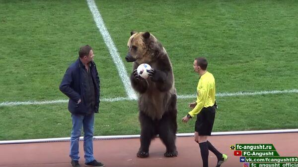 Khai trương trận đấu bóng đá tại Piatigorsk là một chú gấu - Sputnik Việt Nam