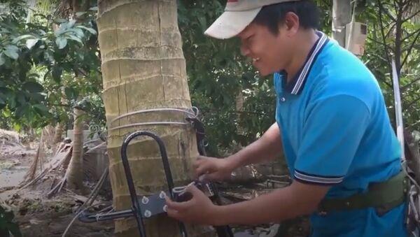 Kỹ sư trẻ chế dụng cụ leo dừa thẳng đứng - Sputnik Việt Nam