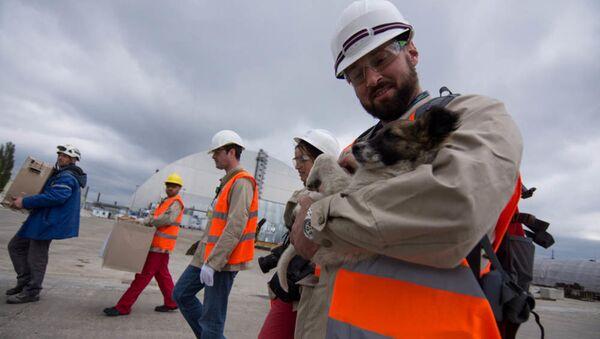 Hai trăm con chó Chernobyl lên đường đi Mỹ - Sputnik Việt Nam