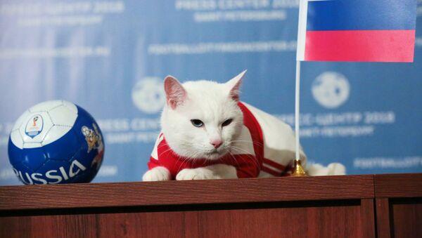 Con mèo Achilles - Sputnik Việt Nam