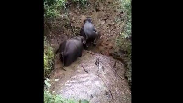 Dân làng Ấn Độ quay video cảnh đàn voi được giải cứu khỏi hồ chứa nước - Sputnik Việt Nam