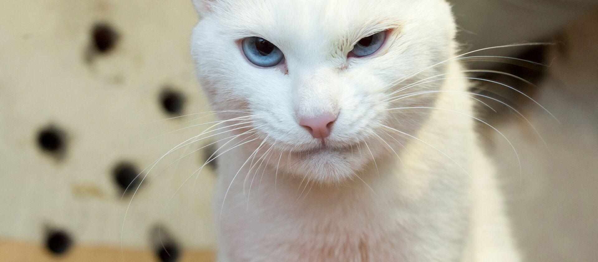 """Mèo Achilles của Hermitage - một """"nhà tiên tri"""" của World Cup - Sputnik Việt Nam, 1920, 11.06.2021"""