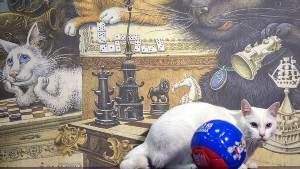 """Mèo Achilles của Hermitage - một """"nhà tiên tri"""" của World Cup - Sputnik Việt Nam"""