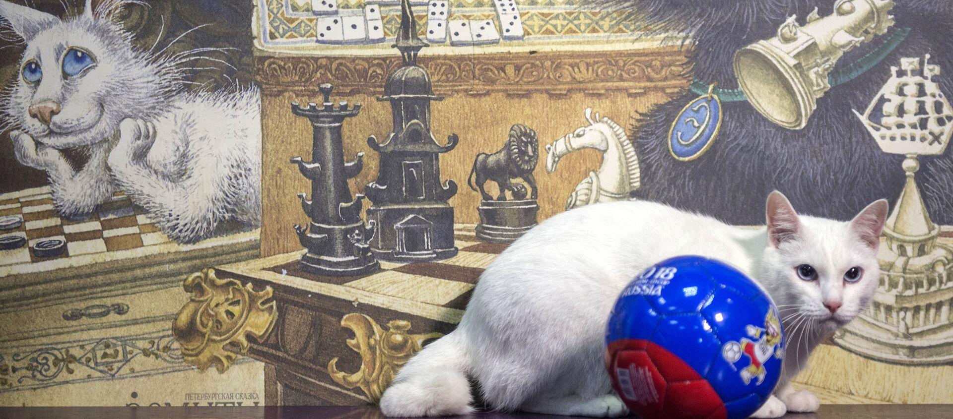 """Mèo Achilles của Hermitage - một """"nhà tiên tri"""" của World Cup - Sputnik Việt Nam, 1920, 25.06.2018"""
