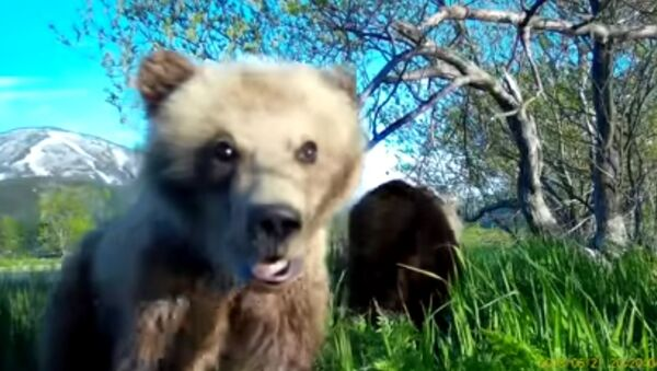 Tại quần đảo Kuril, chú gấu con đã thực hiện video selfia đầu tiên của mình - Sputnik Việt Nam