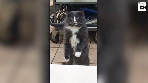 Phản ứng của chú mèo khi lần đầu tiên nhìn thấy rắn - Sputnik Việt Nam