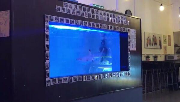 Video quay cá mập vây đen trong bể cá một nhà hàng ở Malaysia khiến dư lận bức xúc - Sputnik Việt Nam