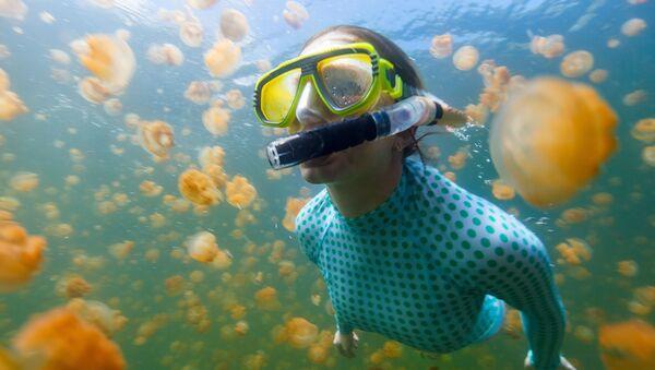 Lặn biển trong Hồ sứa ở Palau - Sputnik Việt Nam
