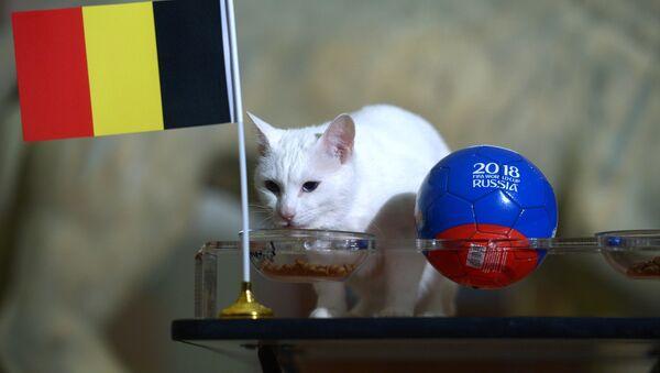 Mèo tiên tri Achilles dự đoán Bỉ sẽ vào chung kết World Cup 2018 - Sputnik Việt Nam