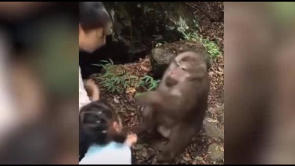 Video sốc: Con khỉ nốc ao cô bé cho nó ăn quà - Sputnik Việt Nam