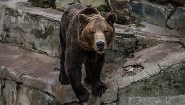 con gấu - Sputnik Việt Nam