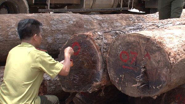 Vụ bắt trùm gỗ lậu Phương râu hồi cuối tháng 4 vừa qua khiến dư luận hết sức quan tâm. - Sputnik Việt Nam